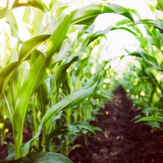 Plateforme 2021 atelier maïs et irrigation - TMCE