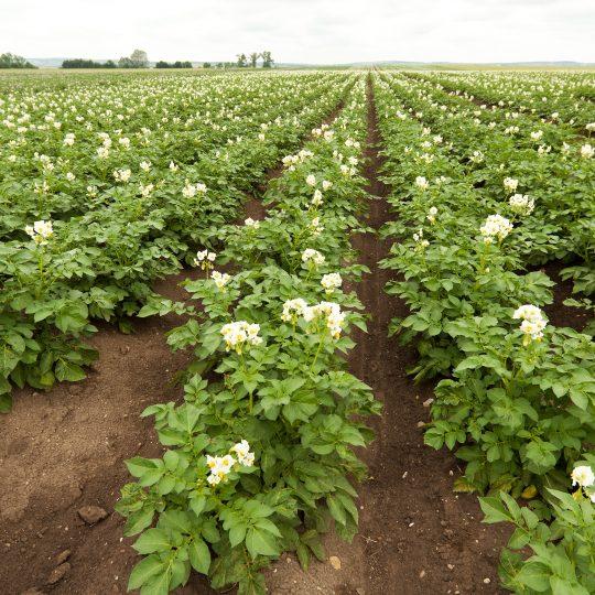 Plateforme 2021 atelier pommes de terre - TMCE